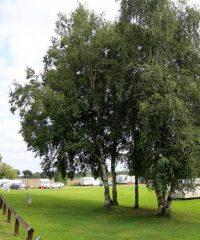 Holly Bank Caravan Park
