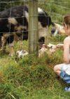 Fairfields Farm
